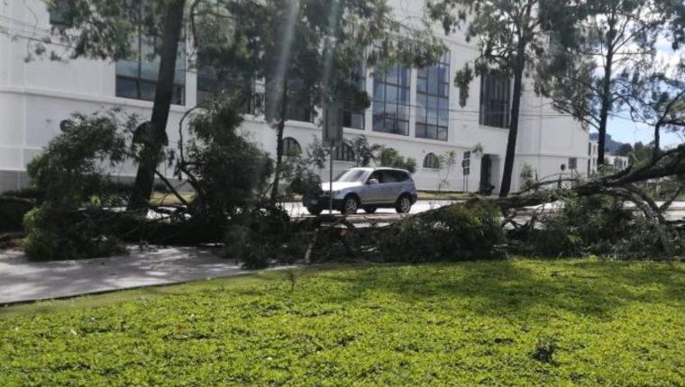 Un árbol en el bulevar Austriaco impide el paso de vehículos. (Foto Prensa Libre: Conred)