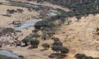 """GRAF4277. BARRANCOS (PORTUGAL)/VILLASBUENAS DE GATA (ESPAÑA), 18/09/2019.- Vista del río Ardila en la frontera natural entre España y Portugal sobre la dehesa lusa, donde trabaja el proyecto """"Life Montado-Adapt"""", que replanta árboles, instala sistemas de riego para alcornoques o ganado vacuno de mertolenda en Herdade da Coitadinha de Barrancos (Portugal), una dehesa en la frontera hispanolusa que desafía al cambio climático. EFE/ Carlos García"""