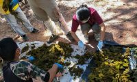 """In this handout photo released by the Office of Protected Area Region 13 on November 26, 2019 and taken on November 25, veterinarians examine pieces of plastic waste recovered from the stomach of a dead deer at Khun Sathan National Park in Thailand's Nan province. - A wild deer was found dead after swallowing 7 kilograms (15 pounds) of plastic bags and other trash in Thailand, an official said November 26, raising the alarm on waste littering the country's waters and forests. (Photo by Handout / Office of Protected Area Region 13 / AFP) / -----EDITORS NOTE --- RESTRICTED TO EDITORIAL USE - MANDATORY CREDIT """"AFP PHOTO / Office of Protected Area Region 13"""" - NO MARKETING - NO ADVERTISING CAMPAIGNS - DISTRIBUTED AS A SERVICE TO CLIENTS"""