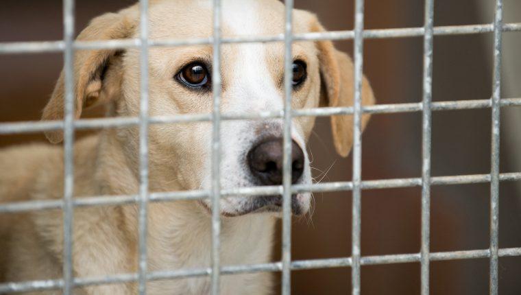 Cuando buscamos una mascota, no está de más mirar primero en los hogares de animales. Foto Prensa Libre: DPA
