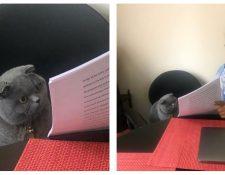 Los gatos son protagonistas en Twitter. (Foto Prensa Libre: twitter.com/BillionTwiTs)