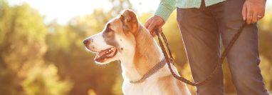 Pasear es una actividad importante para la salud de su mascota. (Foto Prensa Libre: Servicios).
