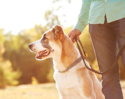Lugares recreativos para pasear con su mascota