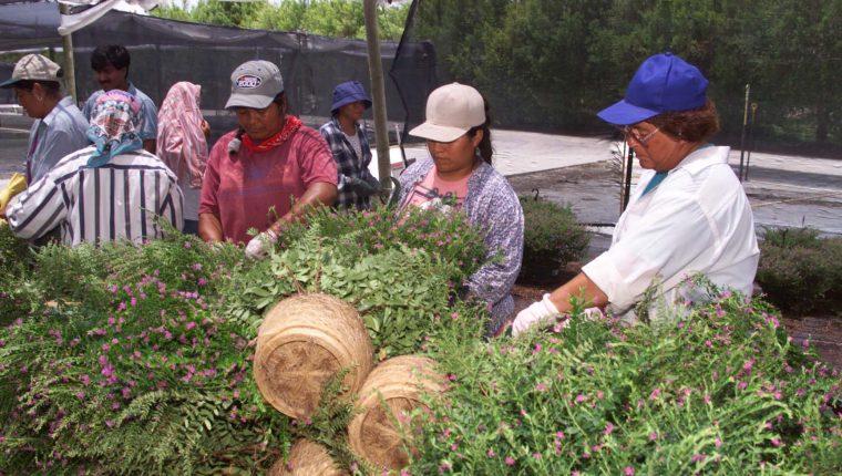 Reportan siete guatemaltecos estafados por firma reclutadora en Canadá