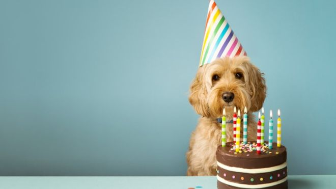 Cada año de vida de un perro no equivale a 7 años humanos, como muchos piensan. GETTY IMAGES