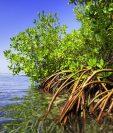 Los depósitos de carbono azul son clave para la salud del planeta. GETTY