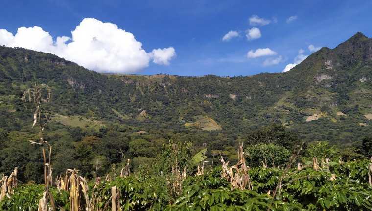 """Vista general del cultivo bajo la forma tradicional maya de la """"milpa"""", en San Juan La Laguna. La sabiduría de los indígenas mayas lacandones dice que cuando un árbol cae, cae una estrella del cielo, y con esa filosofía los pueblos descendientes de la antigua civilización mesoamericana mantienen hoy en día un concepto de sostenibilidad basado en el cuidado a la naturaleza. Los actuales mayas guardan celosamente el legado de sus ancestros, para quienes la madre Tierra era la fuente proveedora de vida, y por eso la respetaban. Foto Prensa Libre: EFE"""
