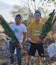 La recuperación del bosque seco espinoso del Cerro de la Santa Cruz en Salamá, Baja Verapaz, es fundamental para la conservación de la flora y fauna del lugar. (Foto Prensa Libre: Cortesía)