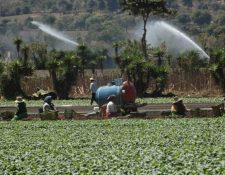 Sistemas de riego, proyectos productivos, seguro agrícola, son algunas de las apuestas de la nueva administración del Maga. (Foto, Prensa Libre: Hemeroteca PL).