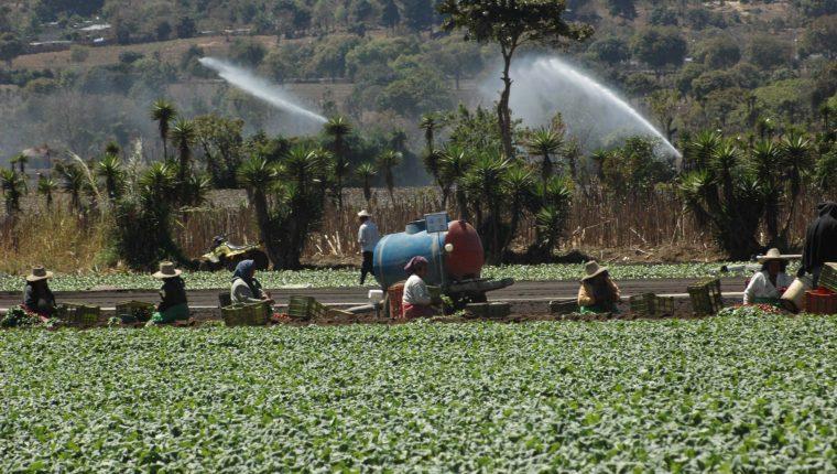 Así es el plan piloto de seguros agrícolas que proyecta lanzar el MAGA