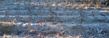 En Xela los campos amanecieron con escarcha. (Foto Prensa Libre: Cortesía Yesenia Rodas).