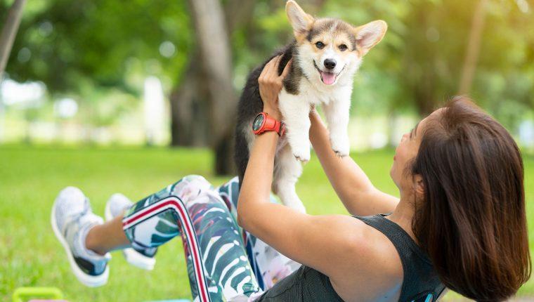 Ejercicios para mantener a tu perro sano y fuerte – Prensa Libre