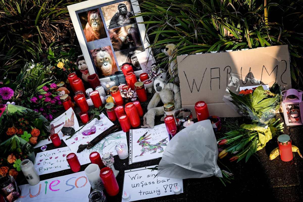 Tragedia en zoológico de Alemania deja 30 monos muertos y aumenta debate sobre pirotecnia