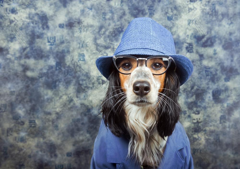 Humanizar a los animales, ¿la nueva tendencia?