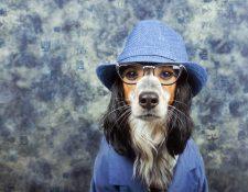 Vestir a los perros es una acción común que puede dañar su salud psicológica. (Foto Prensa Libre: Servicios).