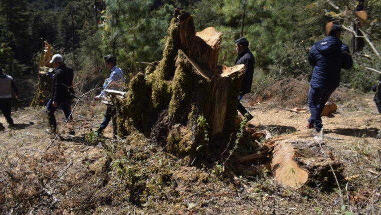 Varios árboles han sido talados en el bosque municipal, donde las autoridades buscan alternativas para frenar a depredadores. (Foto Prensa Libre: Cortesía)
