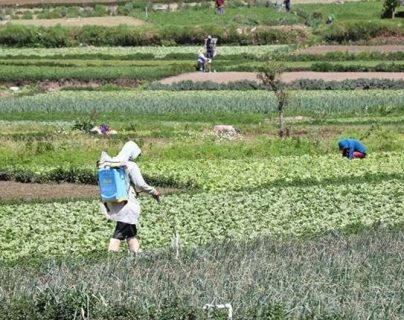El comportamiento de la producción agrícola fue variable durante el 2019, para el 2020 empresarios y productores tienen mejores expectativas. (Foto, Prensa Libre: Hemeroteca PL).
