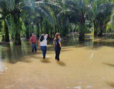 Pastizales cercanos al puente de Río Dulce, Livingston, Izabal han quedado inundados.(Foto Prensa Libre: Dony Stwart)