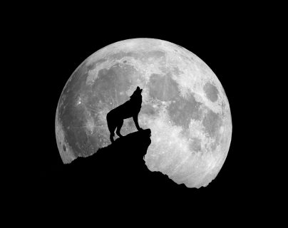 """La """"luna llena de lobo"""" lleva ese nombre porque, según creencias antiguas, había cambios agresivos en esos animales cuando este fenómeno ocurría. (Foto Prensa Libre: Servicios)"""