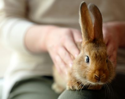 Lo que debe saber antes de tener un conejo como mascota