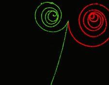 La producción simétrica de la materia y antimateria. Dos fotones invisibles de rayos gamma entran y cada uno produce un electrón (verde) y un positrón o antielectrón (rojo).