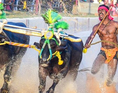 Srinivas Gowda estableció un récord en kambala, una práctica deportiva del sur de India.