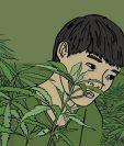 Ba fue obligado a trabajar en una granja de cannabis en Reino Unido.