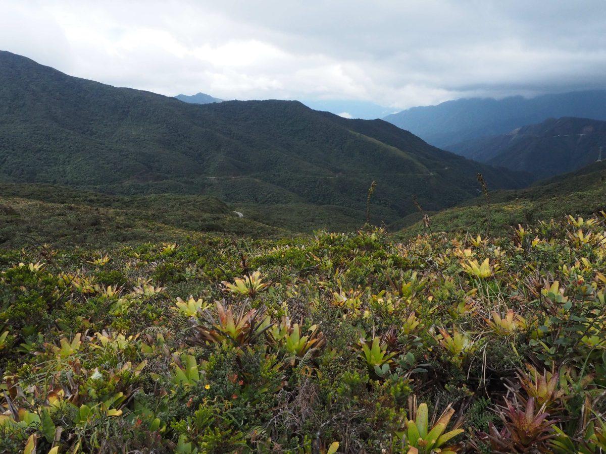 Inteligencia artificial para identificar árboles en la Amazonía de Ecuador