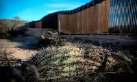 A dead cactus is seen on the ground near the United States-Mexico border wall in Organ Pipe National Park south of Ajo, Arizona, on February 13, 2020. - Construction of US President Donald Trump's border wall in the area has destroyed many species including the Organ Pipe Cactus. (Photo by SANDY HUFFAKER / AFP)