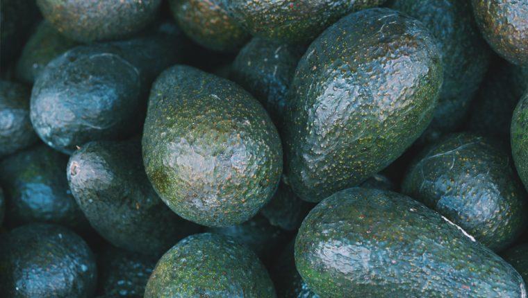 El cultivo y exportación de aguacate es una industria que tiene un potencial en Guatemala y productores busca posicionarse en los siguientes años con el incremento de las hectáreas de siembras. (Foto Prensa Libre: Hemeroteca)