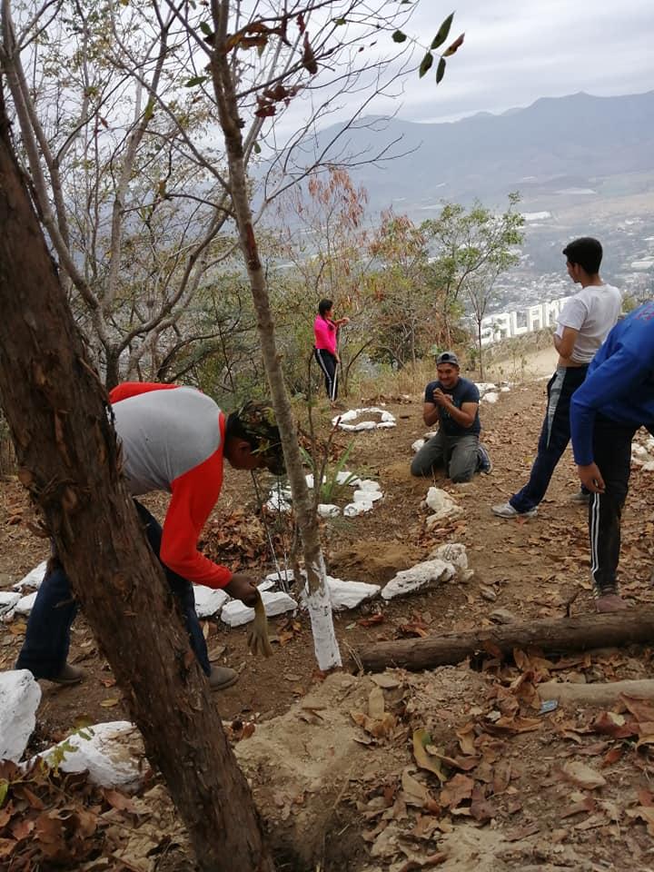 Roban cactus con los que se reforestaba el bosque seco espinoso del Cerro de la Santa Cruz