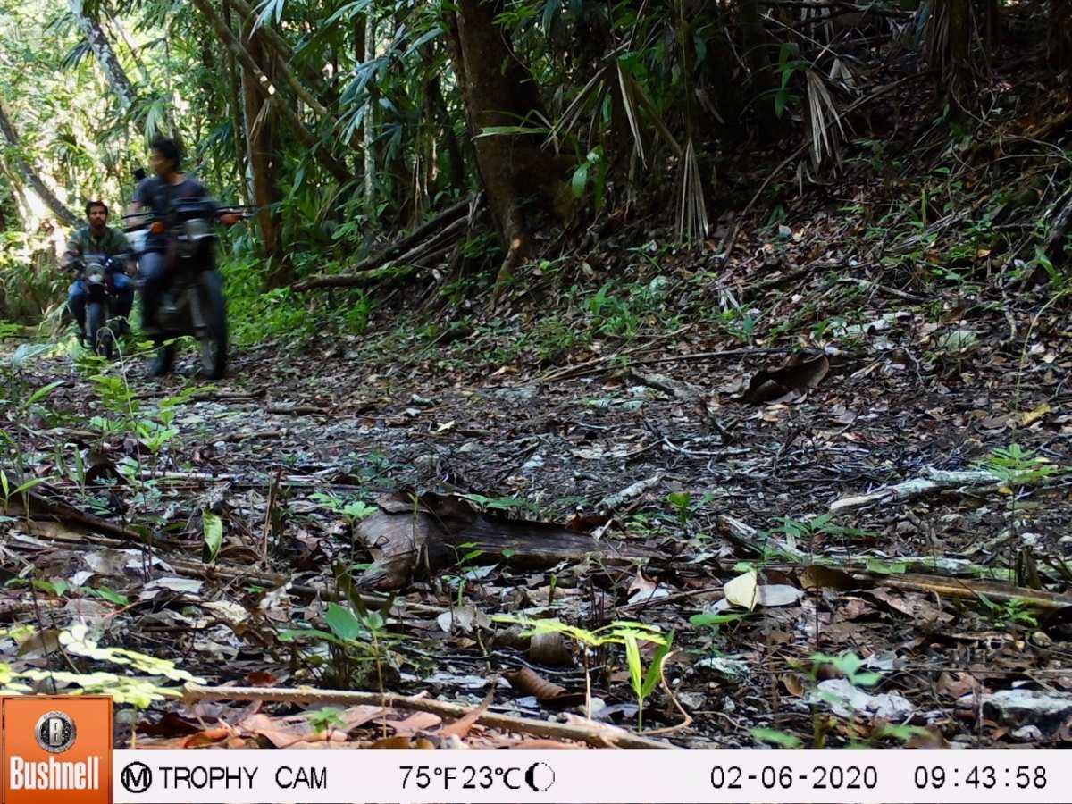 Cámaras trampa captan a cazadores con perros en el Parque Nacional Biotopo Dos Lagunas