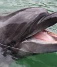 El delfín presentaba señales de haber recibido disparos. Fotografía con fines ilustrativos. (Foto Prensa Libre: Hemeroteca PL)