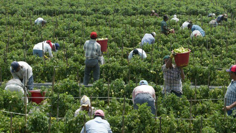 La Embajada de Estados Unidos en Guatemala anunció el restablecimiento del proceso de solicitudes de visa H-2 para empleo temporal agrícola y no agrícola para las personas interesadas con nuevo mecanismo. (Foto Prensa Libre: Hemeroteca)