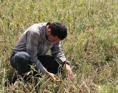 El Insivumeh alertó sobre los efectos del fenómeno de El Niño a la agricultura por la escasez de lluvias. (Foto Prensa  Libre: Hemeroteca)