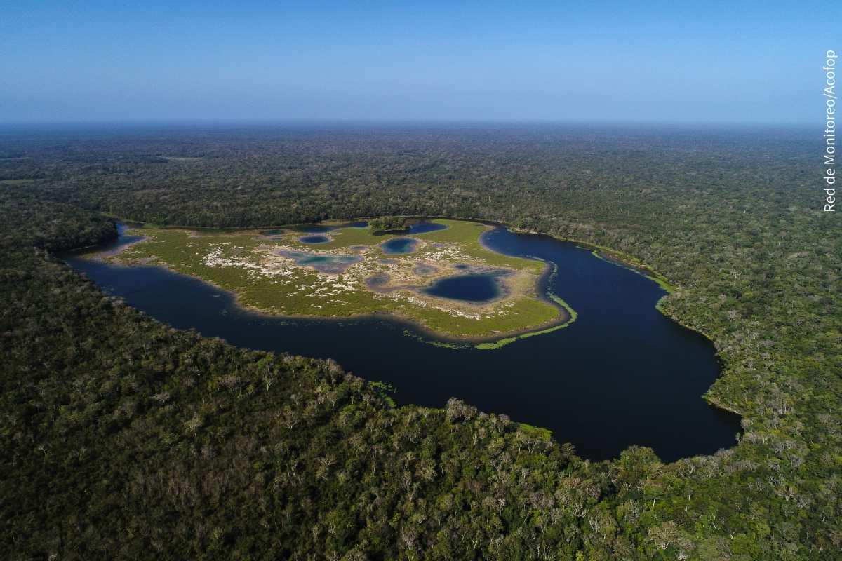 Reserva de la Biosfera Maya, el área protegida más grande de la región, celebra 30 años de conservación