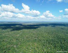 Con 2.2 millones de hectáreas, la Reserva de Biosfera Maya es el área protegida más grande de Mesoamérica. Fotografía Prensa Libre: Acofop