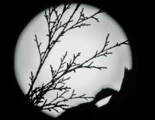 La luna de febrero será la primera superluna de 2020. (Foto Prensa Libre: Keneth Cruz)
