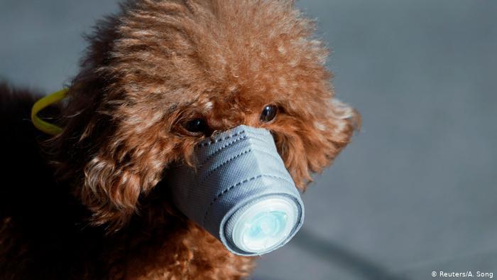 Más vale prevenir que curar. Mascota en Shanghai. (Reuters/A. Song)