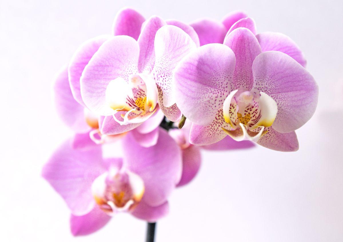 Exposición Nacional de Orquídeas