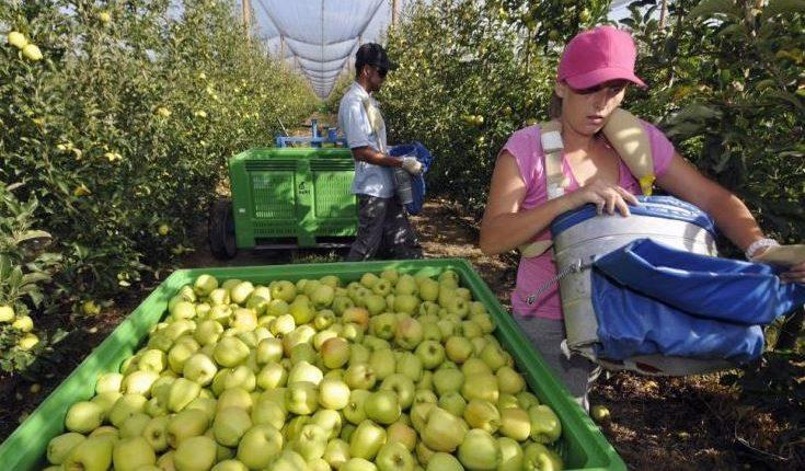 Guatemaltecos son estafados por personas que les ofrecen agilizar una visa de trabajo agrícola temporal para Estados Unidos, pero el único encargado del proceso es el Ministerio de Trabajo. (Foto Prensa Libre: Hemeroteca)