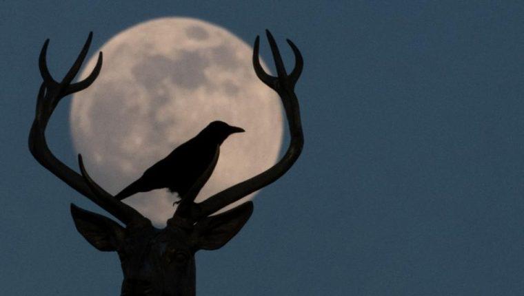Nuestra Luna ofrecerá un gran espectáculo los próximos lunes y martes. (Foto: AFP)