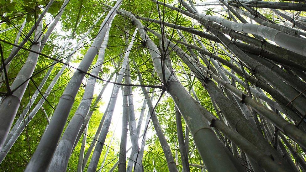 La extraordinaria manera que inventaron en Sudamérica para reemplazar cables y tuberías con bambú