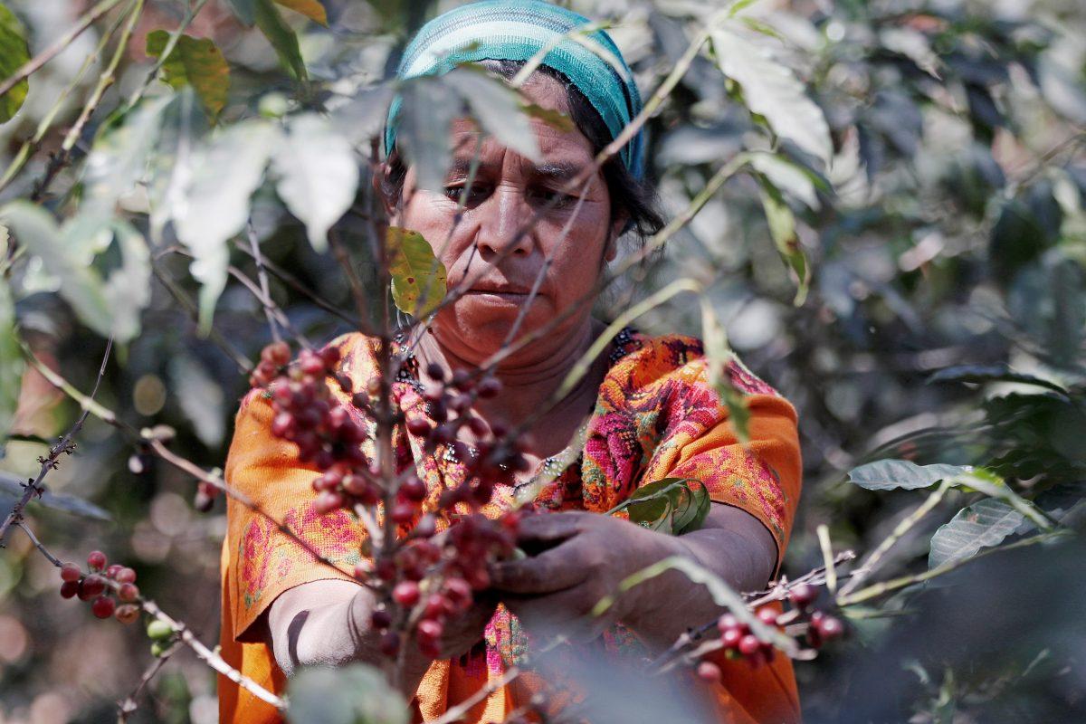 Revelan brecha salarial para las mujeres en Guatemala y estos son los ingresos mensuales promedio