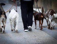 Algunas ciudades de China acostumbran comer perros y gatos, además de otras especies exóticas de animales. (Foto Prensa Libre: EFE)