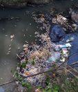 La mortandad de peces causa preocupación a vecinos de las zonas 3 y 4 de Retalhuleu. (Foto Prensa Libre: Cortesía)