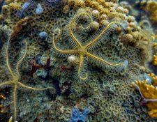 El aumento de temperatura, la acidificación y la proliferación de algas, son algunas de las consecuencias del cambio climático que están deteriorando el Arrecife Mesoamericano.