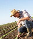 En los puestos que lo permitan se implementará el trabajo en casa, pero en la actividad agro la mayoría de puestos se desarrolla en el campo. (Foto Prensa Libre: Shuttestock)