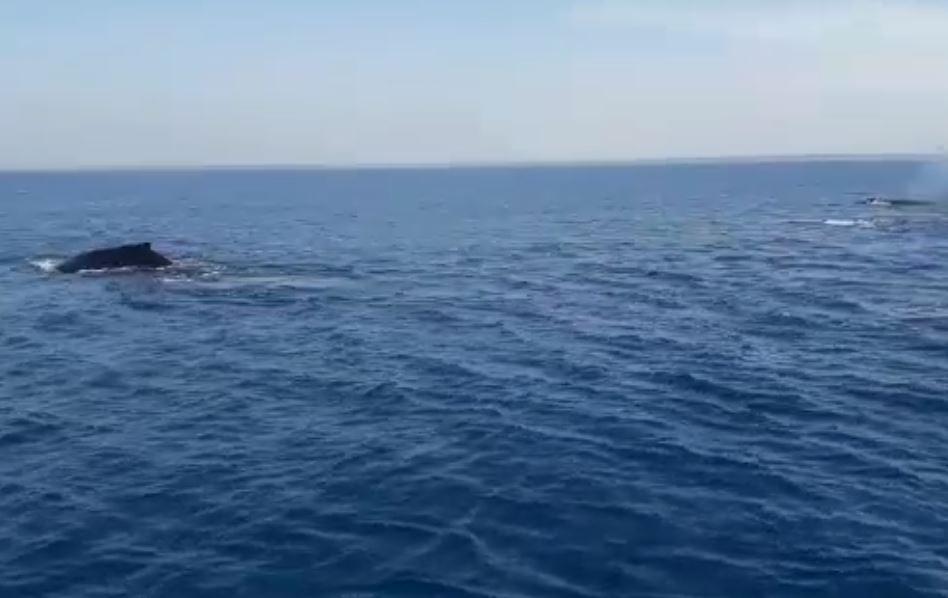 Así fue el avistamiento de un grupo de ballenas en la playa de Chiquimulilla