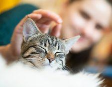 El nuevo integrante de la familia tiene que hacerse querer por el gato. (Foto Prensa Libre: DPA)